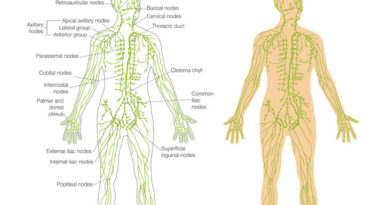 Learn how lymph system aids the body in eliminating toxins