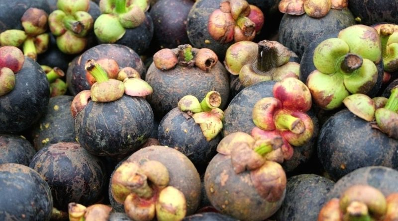 The Multifunctional Activities of Mangosteen Xanthones and Alzheimer's Disease