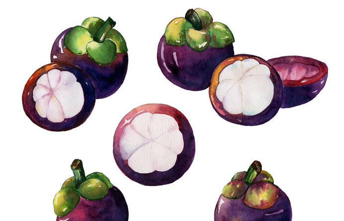 Mangosteen Facts